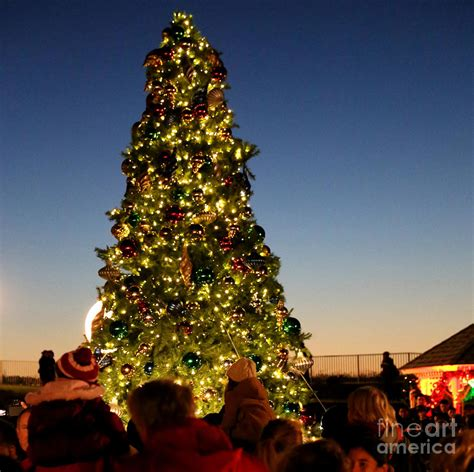 tree light in ritz carlton half moon bay photograph by