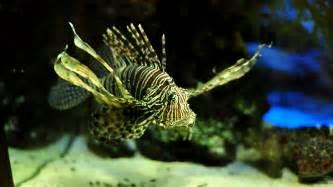 1920x1080 fond d 233 cran aquarium hd 1920x1080