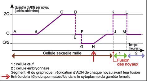 chromosome y supplementaire chapitre 2 brassage g 233 n 233 tique et diversification du g 233 nome