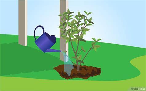 plants that grow in dark rooms كيفية زراعة الياسمين wikihow