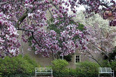 Magnolia Garden by Featured Photos Tagged As Pink And Comp29 Travellerspoint Travel Photography