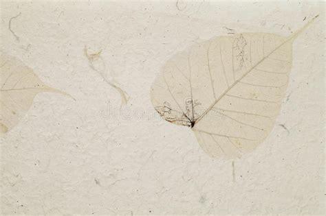 Handmade Leaf Paper - handmade leaf paper stock image image of antique