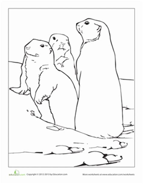 coloring page prairie dog prairie dog printable coloring pages