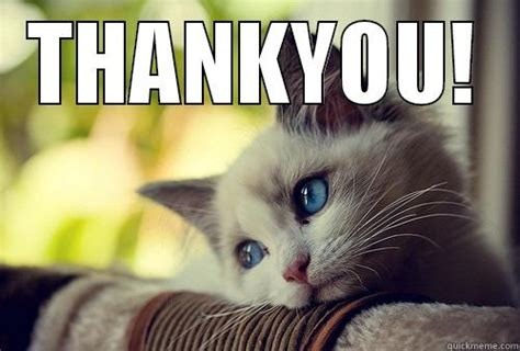 Thank You Cat Meme - thankyou by cat quickmeme