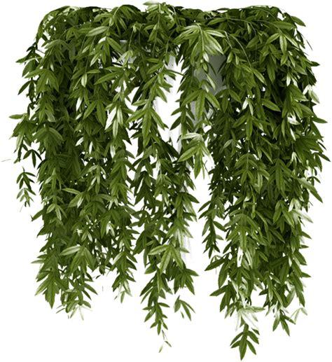 imagenes png vegetacion zoom dise 209 o y fotografia enredaderas ivy para decorar