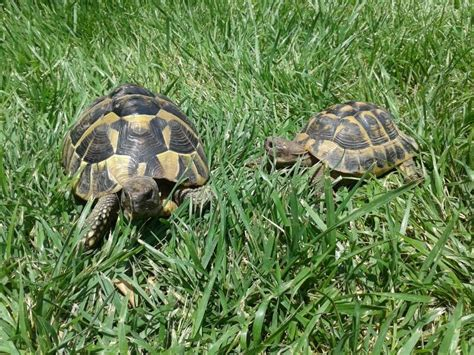 tartarughe da giardino tartarughe in giardino programmanatura