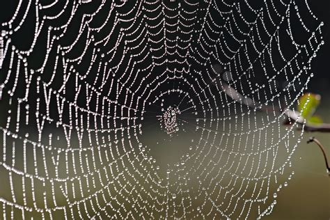 file spider web with dew drops04 jpg wikimedia commons