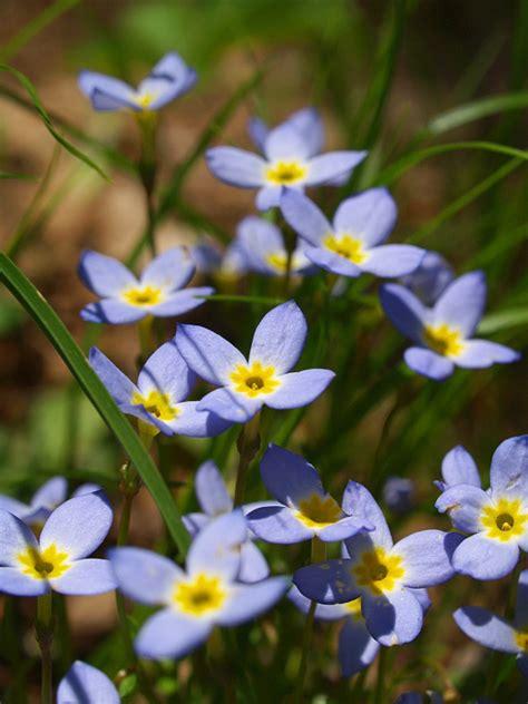 houston plants & garden world