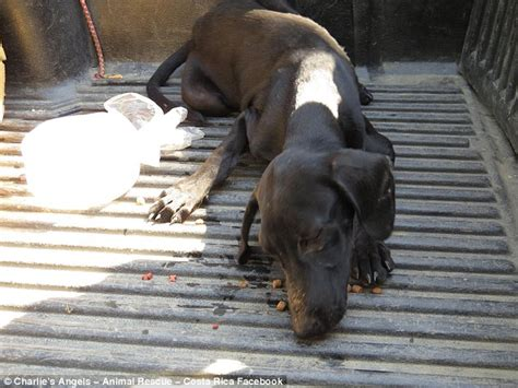 dehydration in dogs dehydrated abandoned collapses and cries when someone