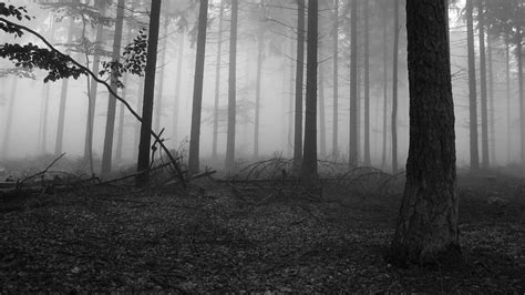 hd wallpaper black nature black and white nature wallpapers wallpaper cave