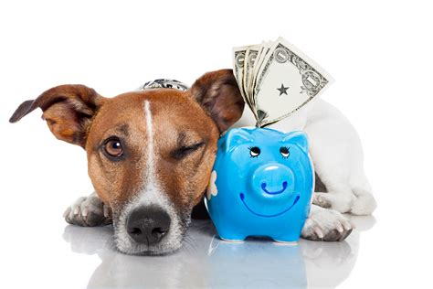 puppy insurance happy national pet health insurance month