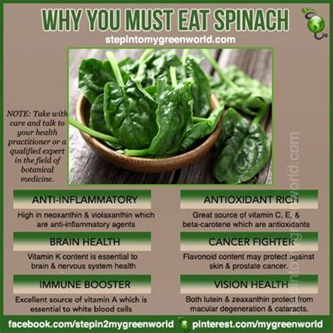 Spinach For Detox by Do You Eat Spinach Did You That It Is One Of The