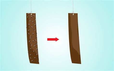 How To Make Fly Paper At Home - 17 best images about home made bug repellent on