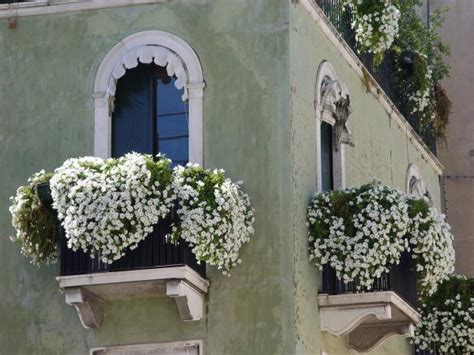 fiori per balconi soleggiati fiori da balcone estivi guida ai pi 249 bei fiori colorati