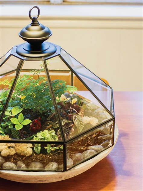 Terrarium Light Fixture Make A Terrarium Hgtv
