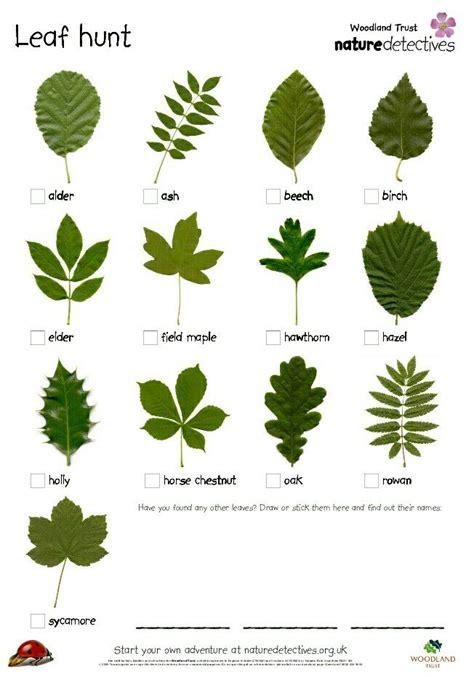 leaf pattern identification leaf identification pinteres
