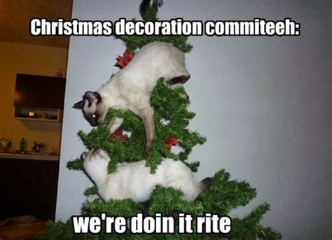 Cat Christmas Meme - animals and christmas funny animal meme collection 14