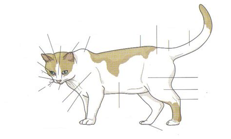 cat skeleton diagram cat external anatomy pictures to pin on pinsdaddy