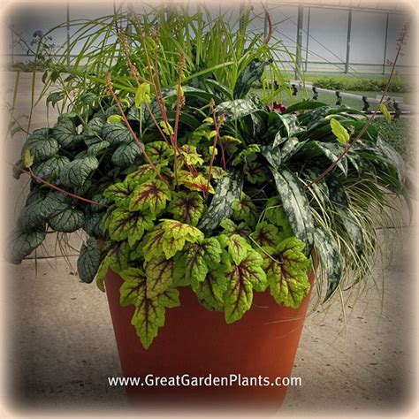 shade container gardening flickr photo sharing