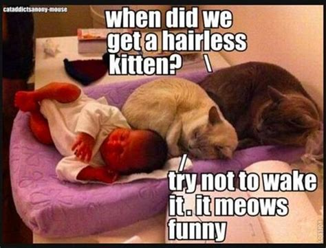 Funny Dog And Cat Memes - funny cats and dogs