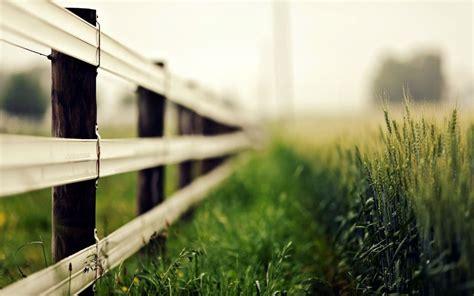 nature macro fence fence fence grass ears ears blur rye