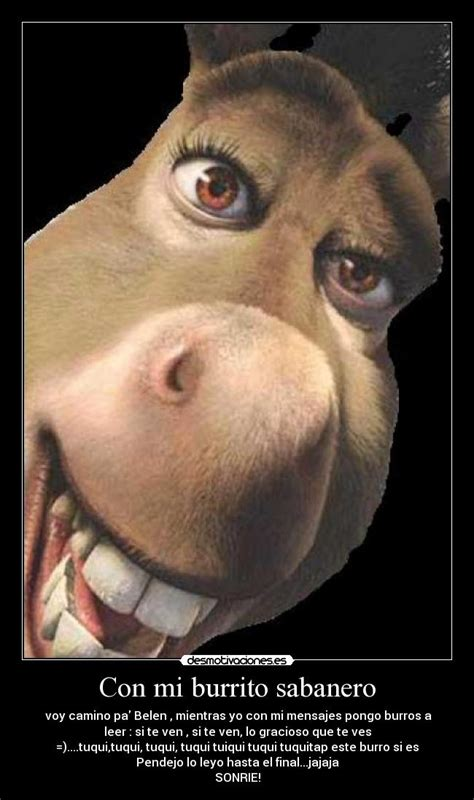imagenes de amor chistosos del burro shrek con mi burrito sabanero desmotivaciones