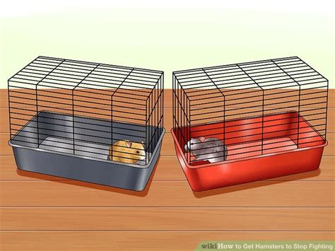 how to get to stop how to get hamsters to stop fighting 13 steps with pictures