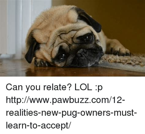 pug yelling at owner 25 best memes about lol p lol p memes