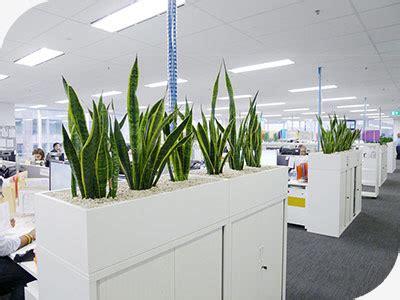 planter boxes  hire sydney buildings hotels offices