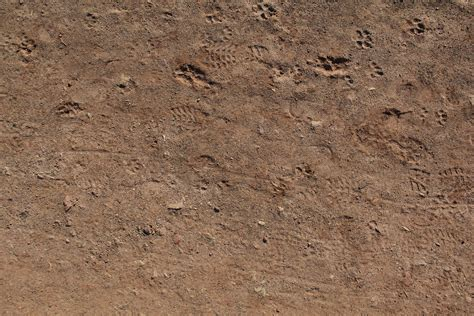 ground textures ground texture animal track brown dirt rock path outdoor