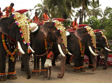 elephant festival   india  fairfestival