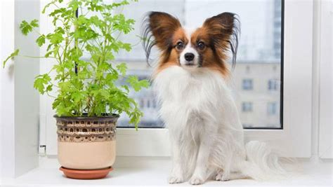 house plants safe for dogs house plants safe for pets mnn mother nature network