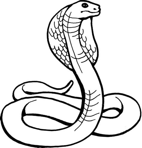 king cobra drawing clipart best