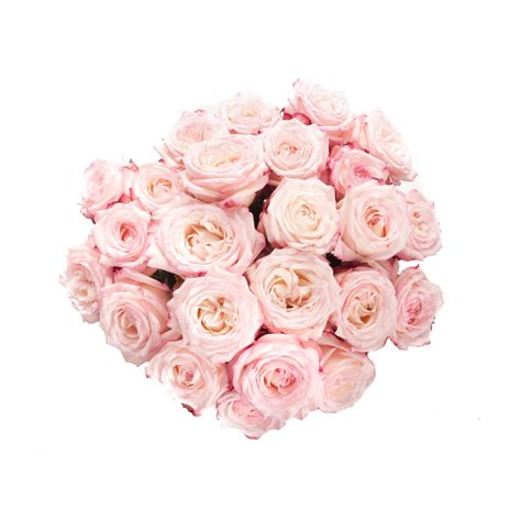 pink roses valentines day s day pink and garden roses flower muse