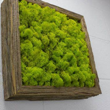 green moss frame water free green wall moss and
