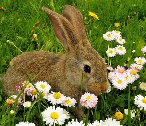 Tas Rabbit Flower banco de im 193 genes nuevo mix de im 225 genes hermosas para