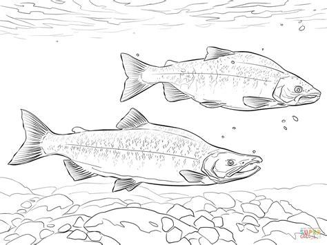 salmon fish coloring page kokanee salmon coloring page free printable coloring pages