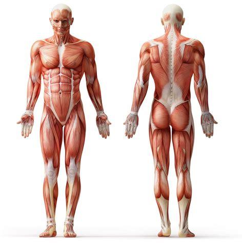 pain body muscle man anatomy human body anatomy system