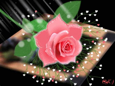 wallpaper flower gif animated pink rose flower quot for the love of gifs