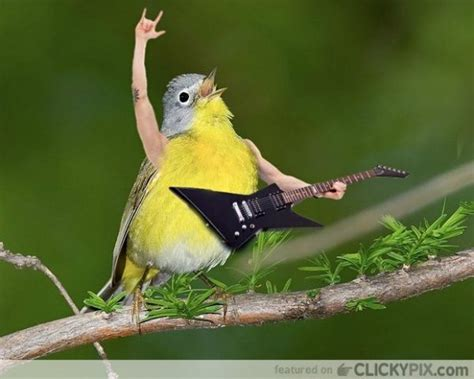 photoshoppers give birds the human arms they ve always