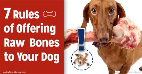 is chicken bad for dogs two saving to follow if you give your bones