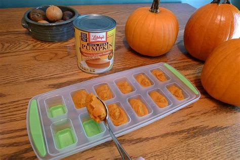pumpkin puree for dogs 7 benefits of pumpkin for dogs chasing tales