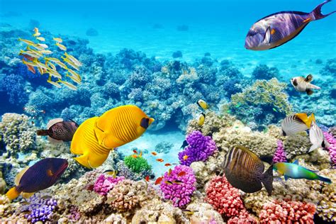 Coral Reef L by Great Barrier Reef The Largest Coral Reef Tourism In The