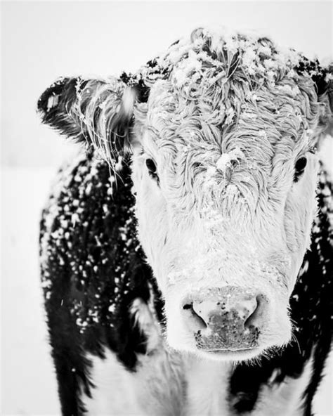 50 Farmhouse Style Gift Ideas from Etsy!