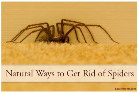 25 best ideas about keep spiders away on tick
