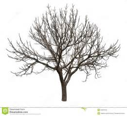 bare tree isolated over white royalty free stock photos