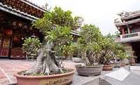 bonsai secrets designing growing bonsai care