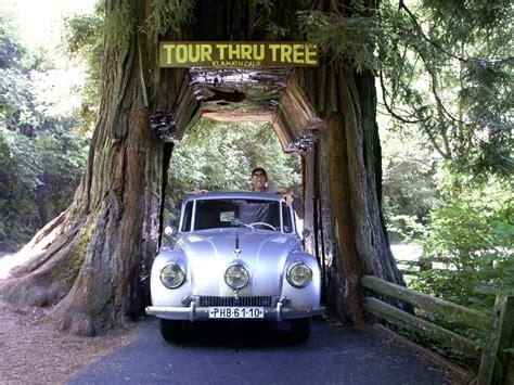 Chandelier Tree In The Drive Thru Tree Park 1e Tour Thru Tree Klamath California