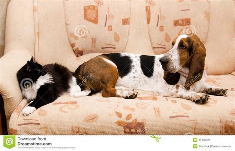 cat scares dog on couch cat and dog on the couch stock photo image of couch
