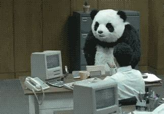 panda gifs find & share on giphy